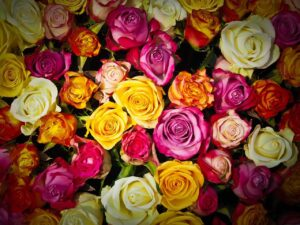roses, bouquet of roses, bouquet
